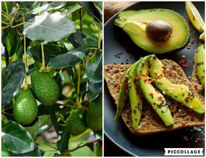 Benefit Of Avocado